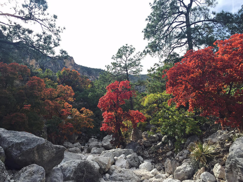 Beautiful Fall Colors at Guadalupe Mountains National Park - the Badon Hill Blog