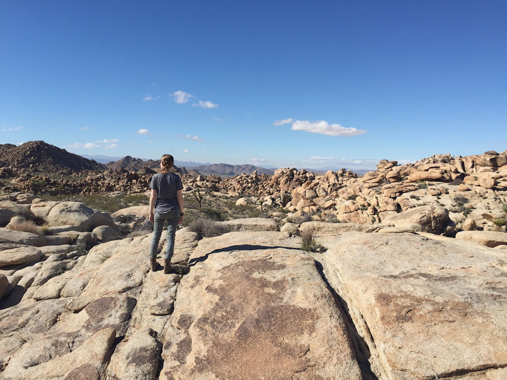 Looking out over the odd, rocky landscape of Joshua Tree National Park