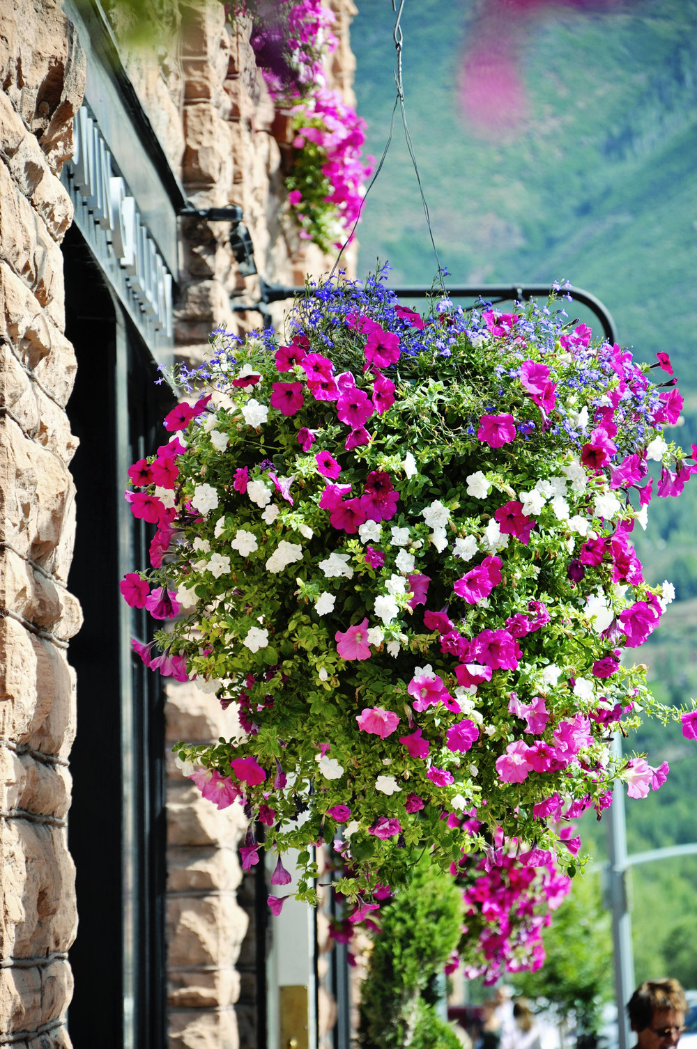 Cascade of beautiful flowers Aspen Streets