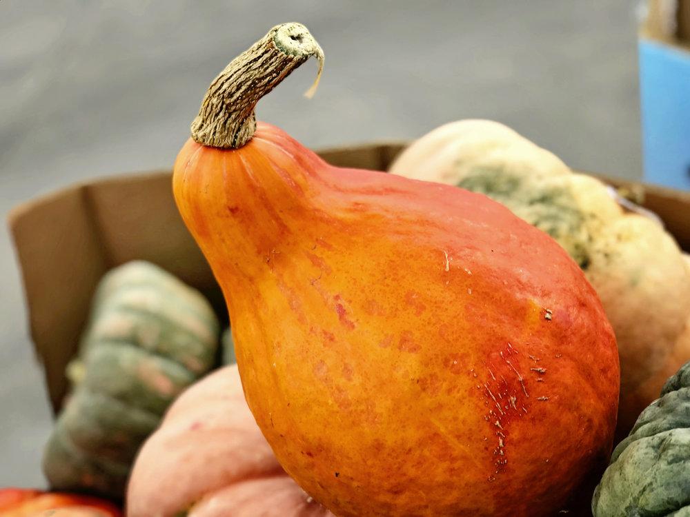 KYPearPumpkin.jpg