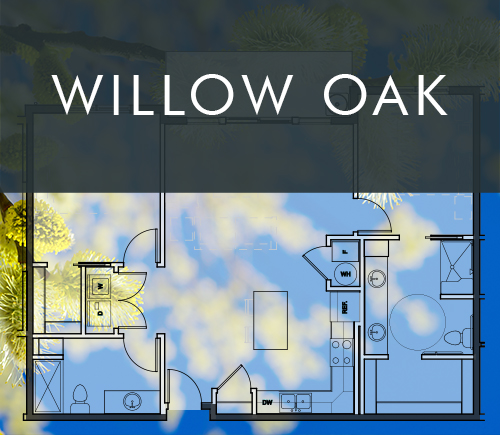 willowoak.jpg