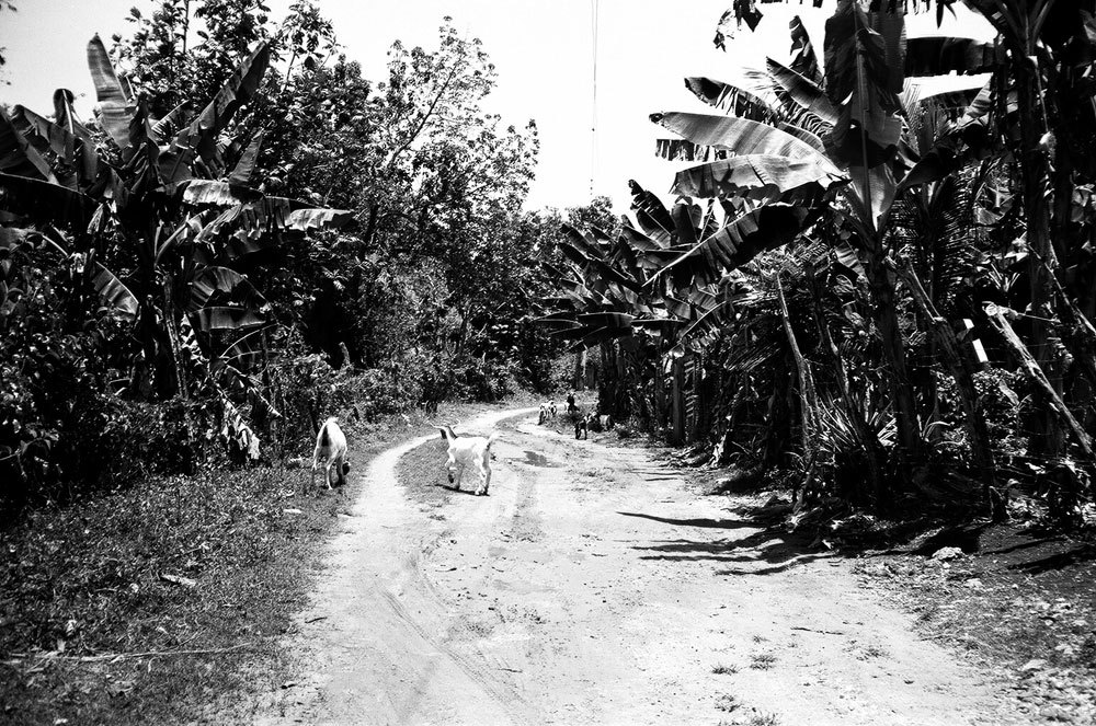 jamaica19.jpg
