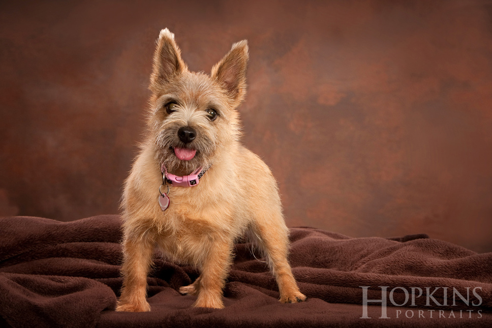 dog_pet_photography_studio.jpg