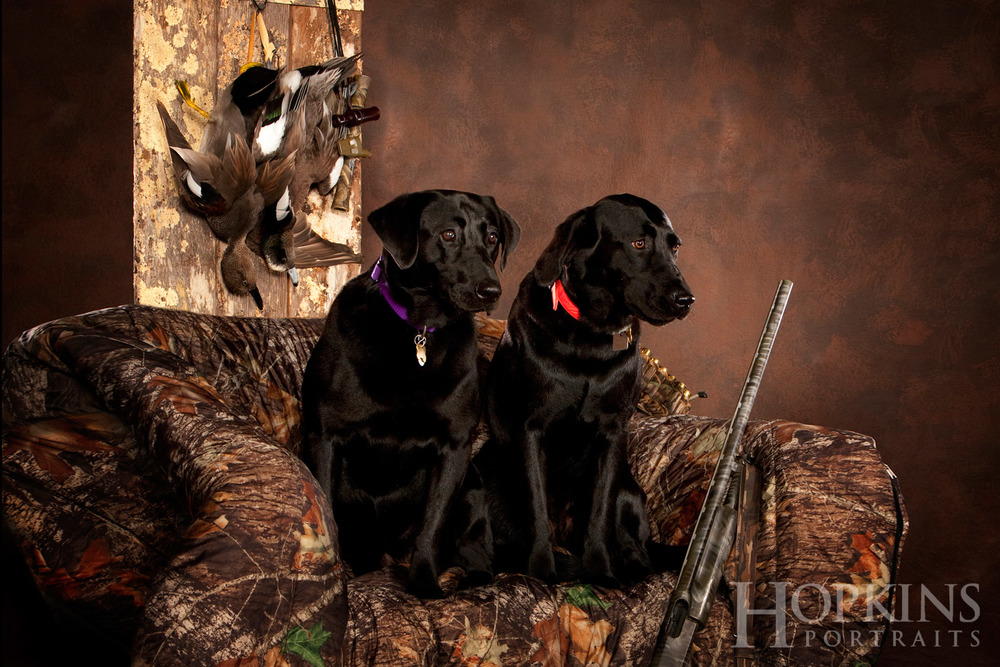 hunting_dog_photography_studio.jpg