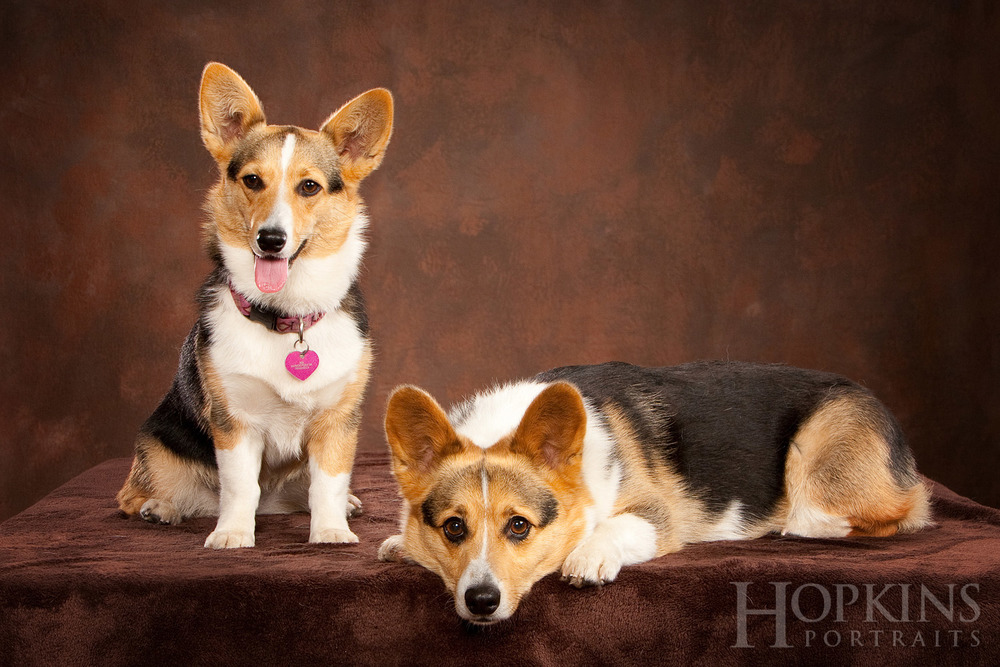 pet_photography_studio.jpg