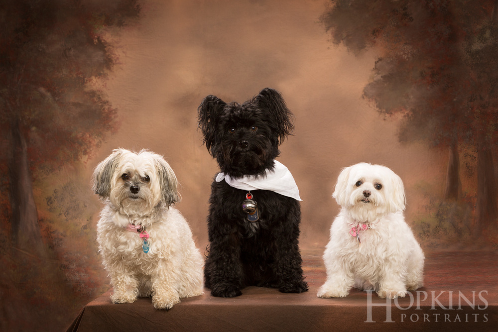 furry_friends_pets_portraits_studio.jpg