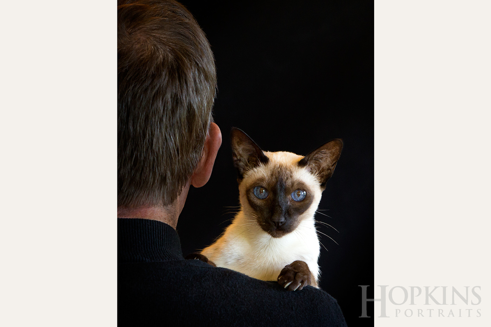 talbert_cats_siamese_portraits.jpg