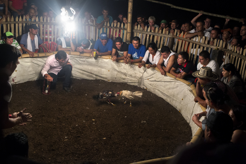 A crowd gathers around a cockfighting pit in Muzo, Colombia, on July 25, 2015.