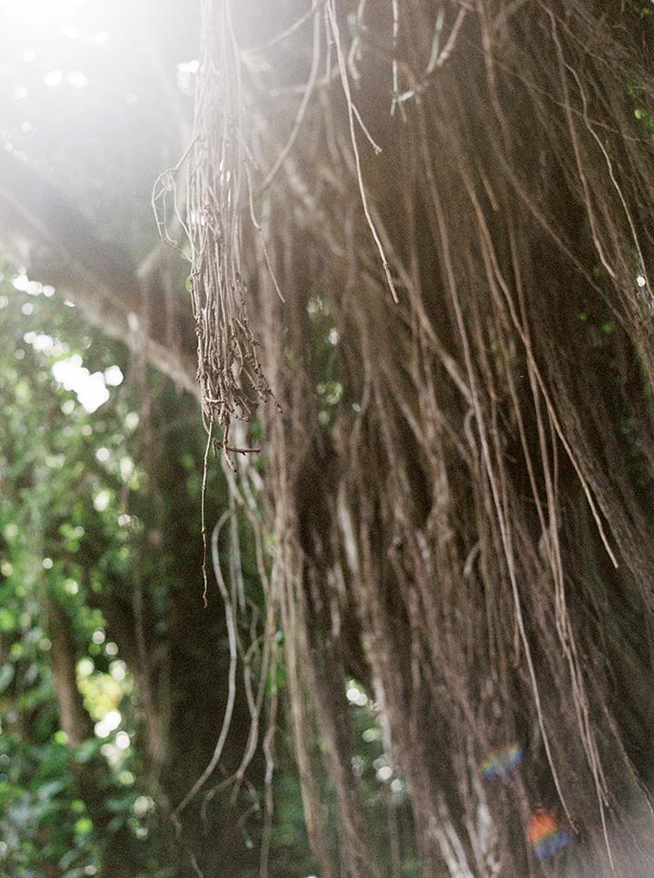 035Outlive+Creative+Tropical+Northwest+Columbia+Gorge+Elopement+Film+Photographer.jpg