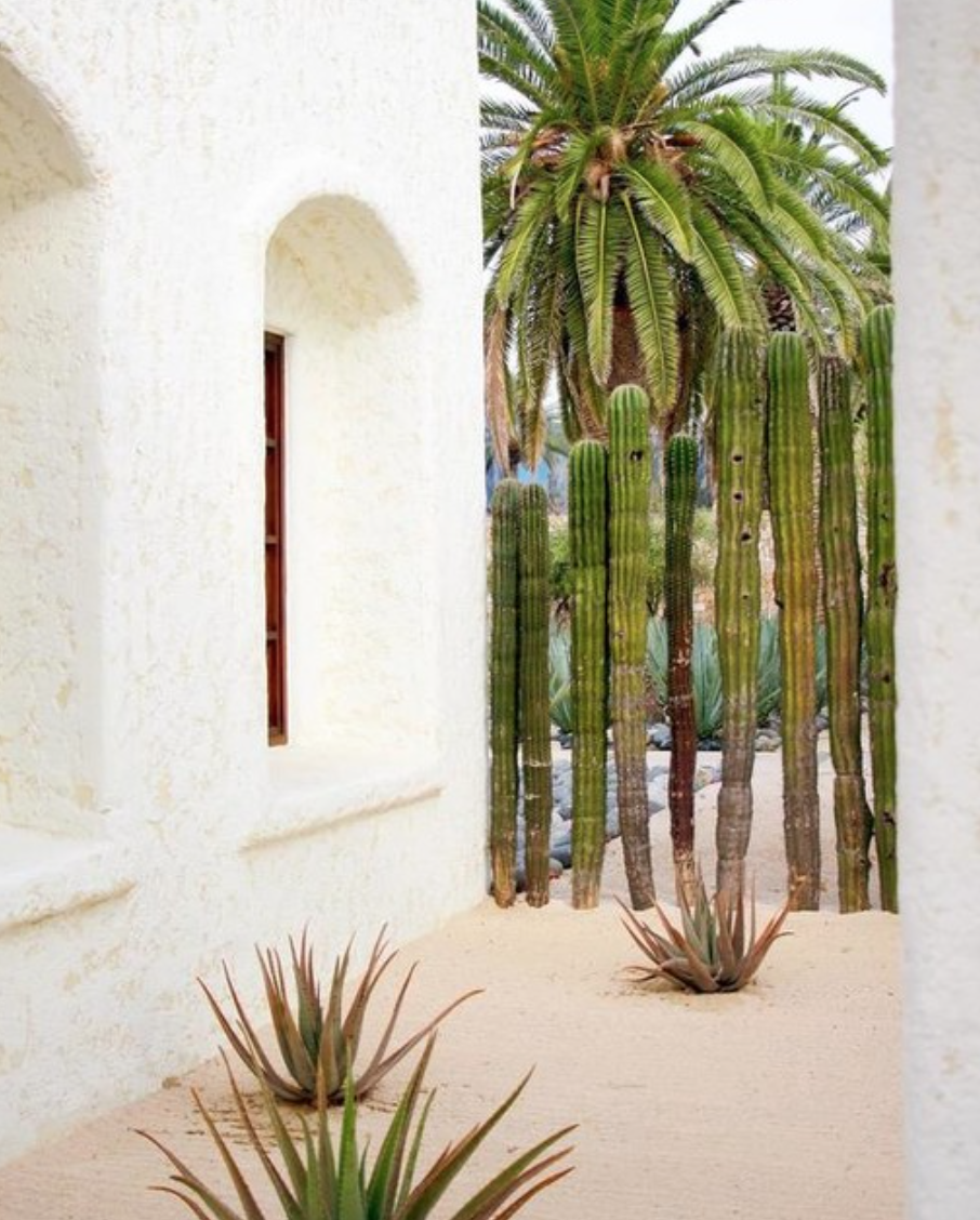 037cabo•mexico•travel•destination•photographer•videographer•outlivecreative•styled•shoot.png
