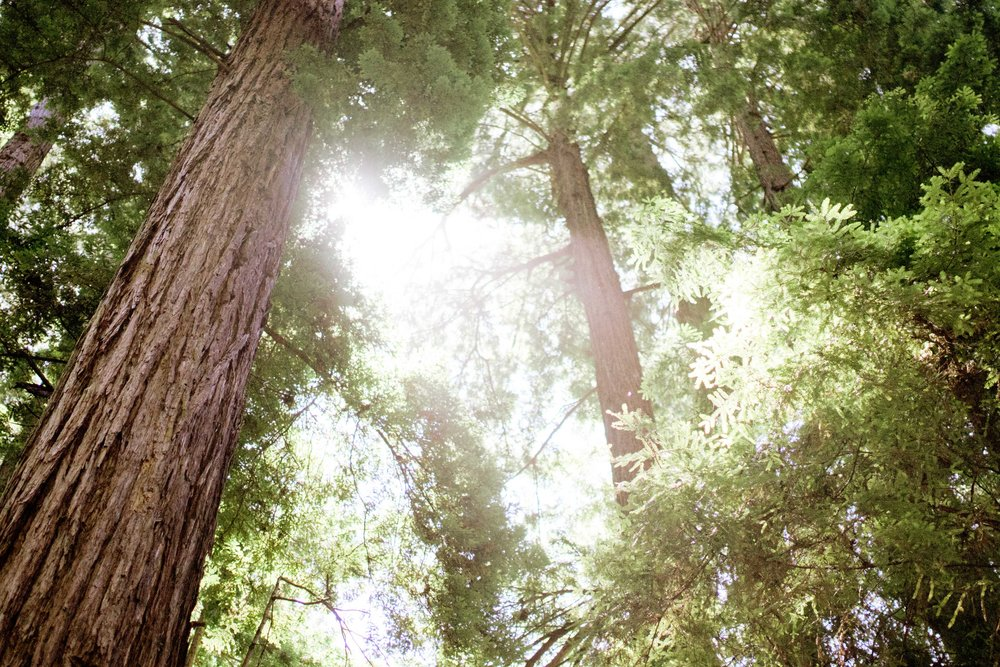 004_Krysten-Crebin-Muir-Woods-Elopement-Wedding-Photographer.jpg