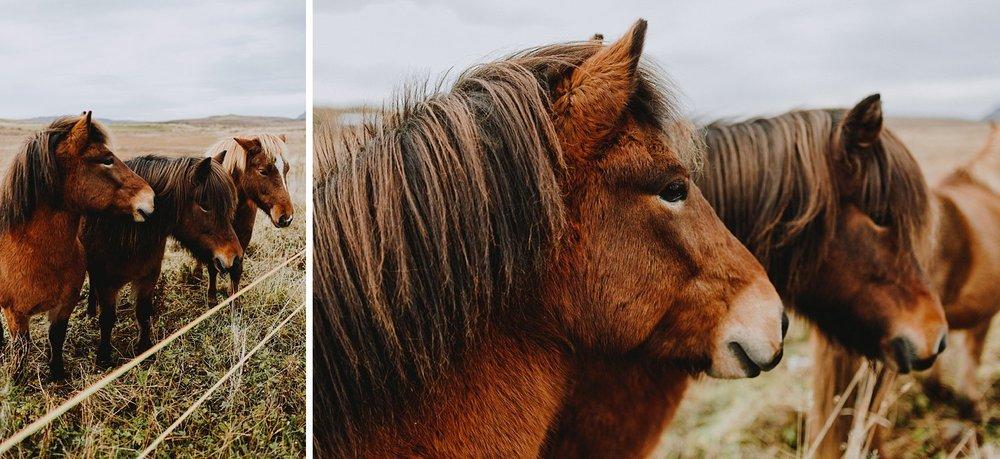CarolinaSegrePhotography_Iceland_0001.jpg