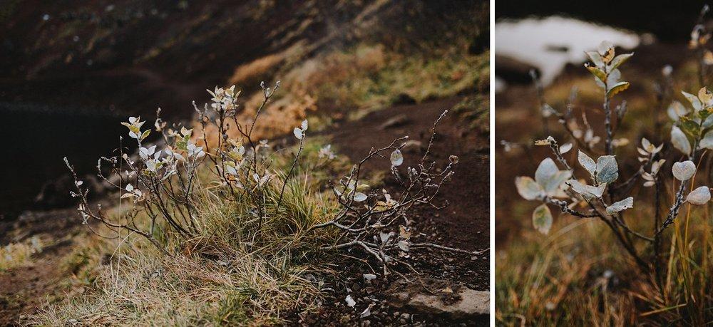 CarolinaSegrePhotography_Iceland_0014.jpg