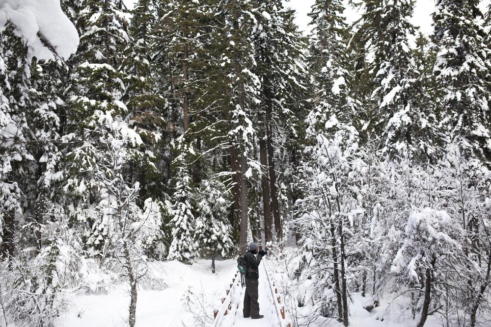 Outlive+Creative+Winter+Wonderland_0002.jpg