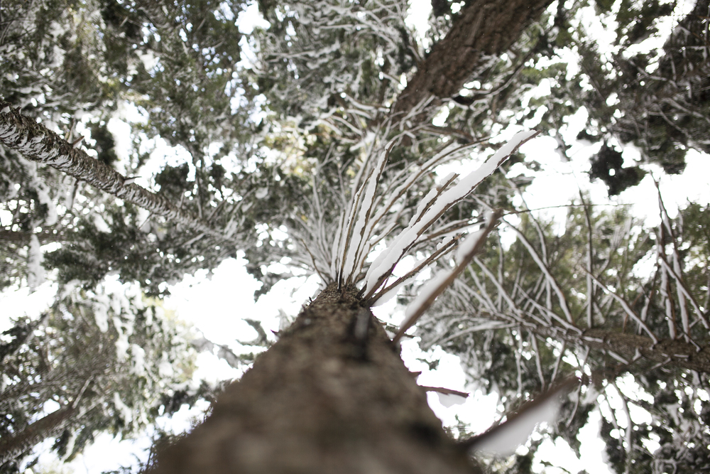 Outlive+Creative+Winter+Wonderland_0004.jpg