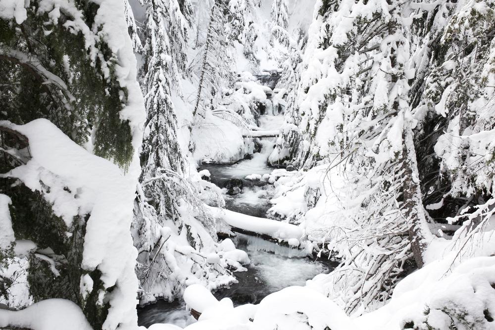 Outlive+Creative+Winter+Wonderland_0011.jpg