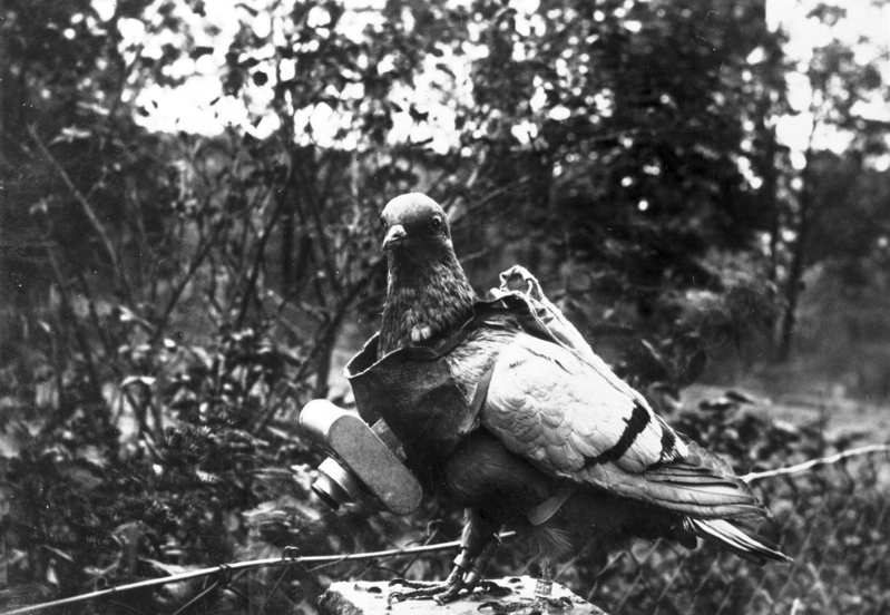 Figure 1: A carrier pigeon with aerial camera, probably taken during World War I. Source: Cropped from Bundesarchiv, Bild 183-R01996 / CC-BY-SA 3.0