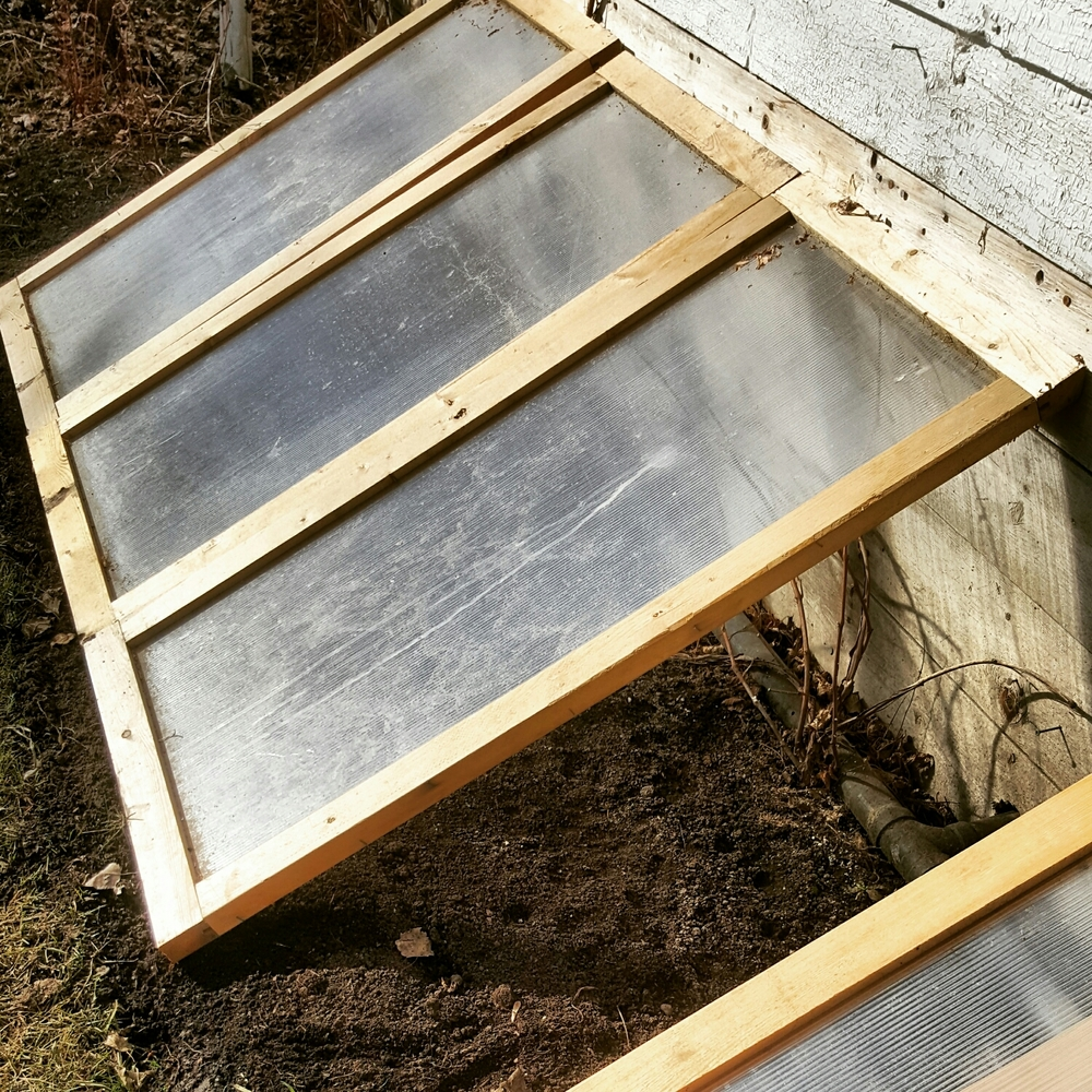 Unheated cold frames in Edmonton. Germination March 18th.