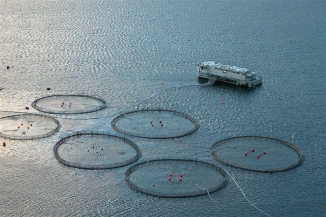 Merdene blir store, og dype. Er det så lett å badbehandle merder på opptil 175 meter?  (Foto: WIKIPEDIA COMMONS)