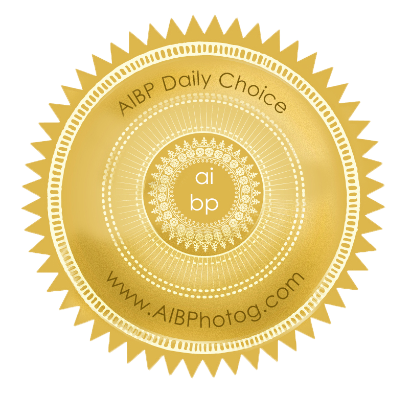 DailyChoice.png