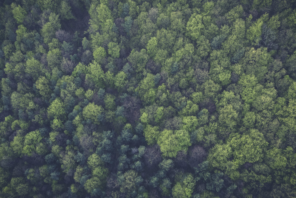 bg_skogen.jpeg