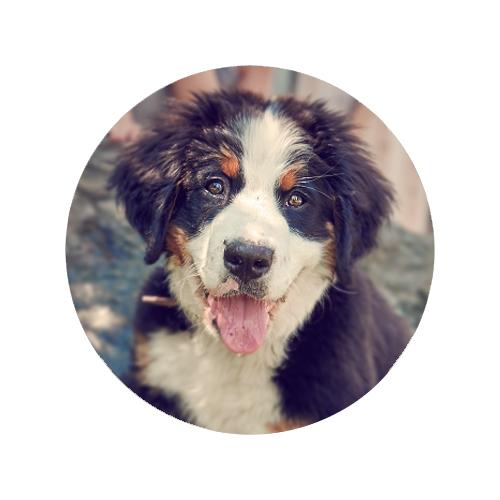 Amira  Unser Krippenhund