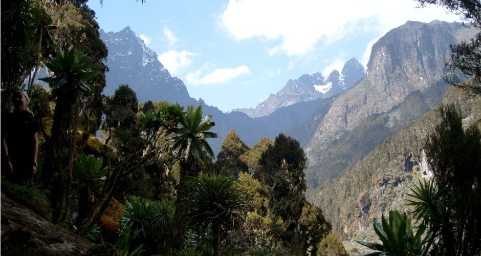 Rwenzori Mountains / Rwenzori National Park. Photo credit: Meros.org
