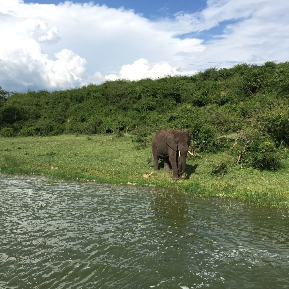 See hippos, giraffes, elephants, lions...all the big ones...on safari