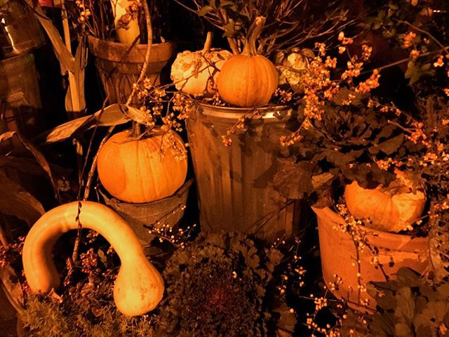 Pumpkin Patch at The Pig #thespottedpig #nyc #fall #wine #winelover #instawine
