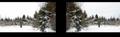 Becka Viau,À la recherche des forêts qui répètent l'écho de l'Acadie / Seeking the woods that echo Acadie, 2014,Vidéo numérique à deux canaux − Two-channel digital video
