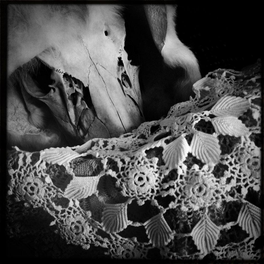 Cervidae Lacinia, Ossa (series), 2011-2015, Digital photographic prints, 25cm x 25cm, printed on archival photo paper, unframed, 100 CAD