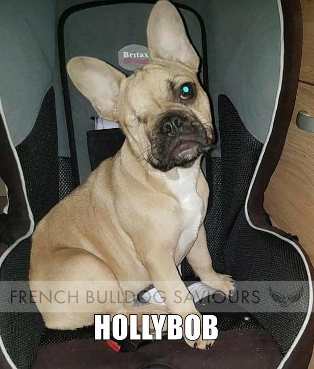 HollyBob Home.jpg