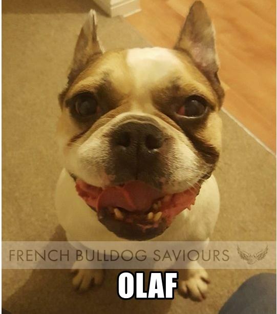 OlafG.jpg