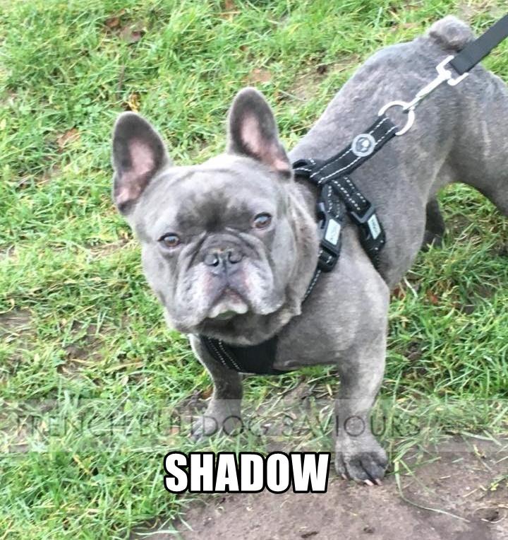 ShadowhomeG.jpg