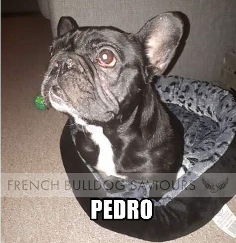 PedrohomeG.jpg
