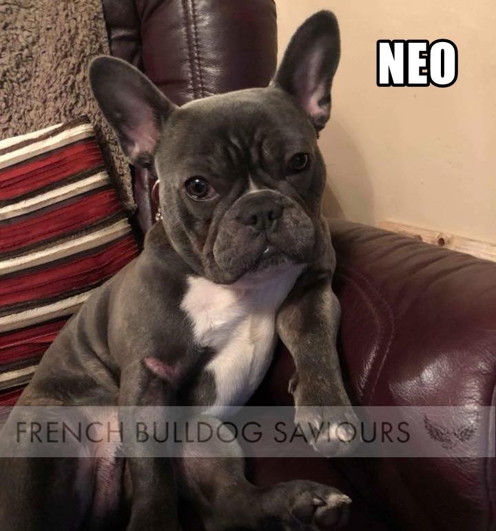 NeohomeG.jpg
