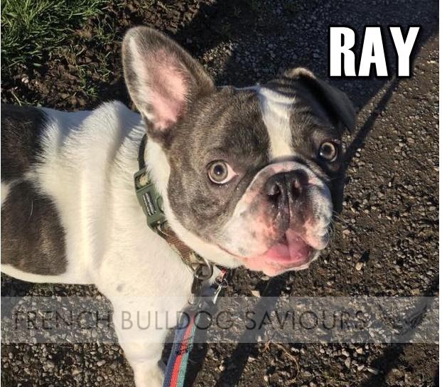 RayAd.jpg