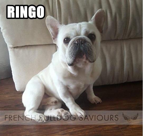 RingoHG.jpg