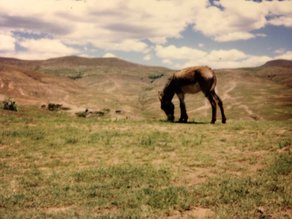 One of the many donkey grazing, overlooking mountain valleys.
