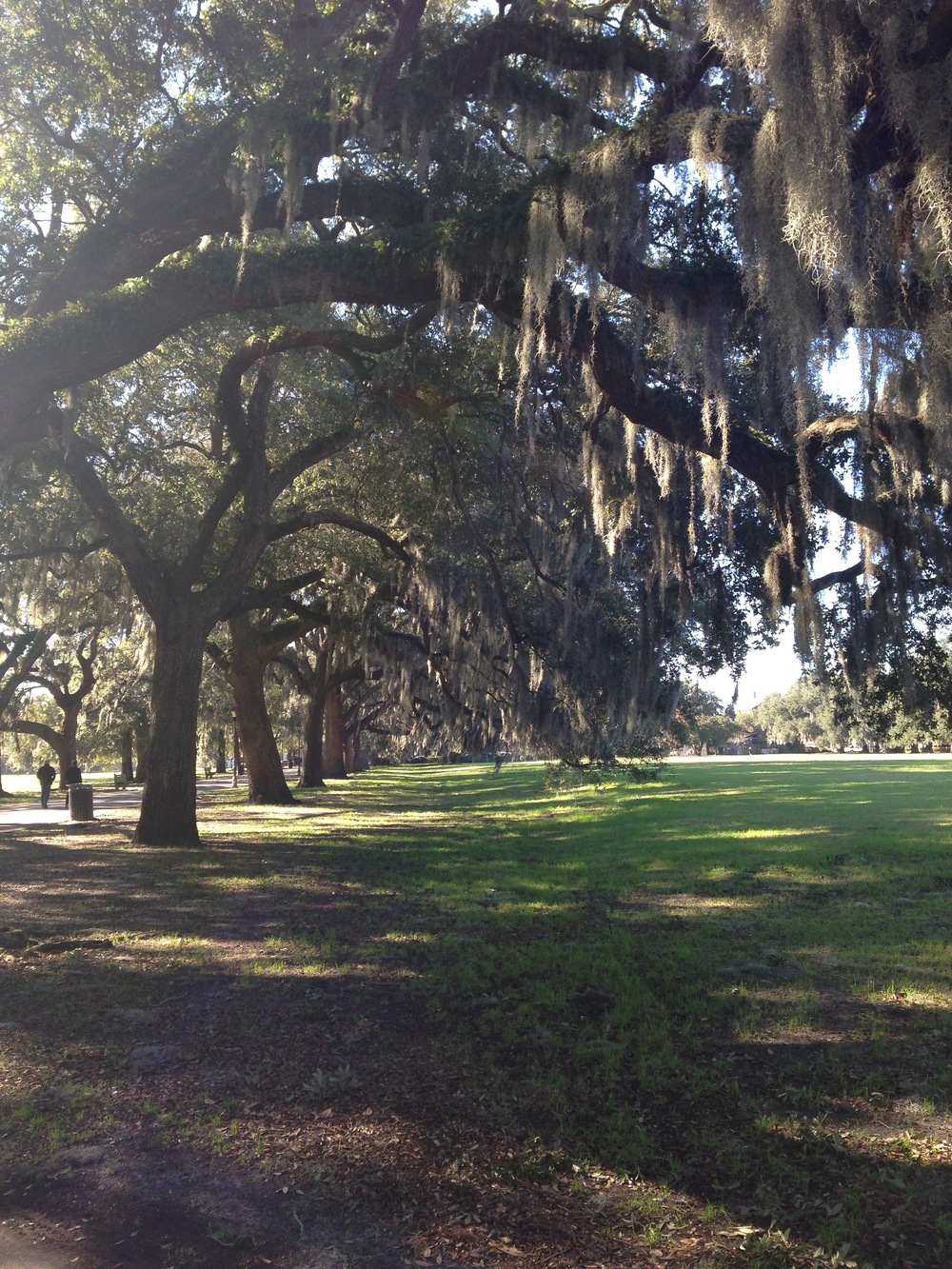Iconic live oak trees.