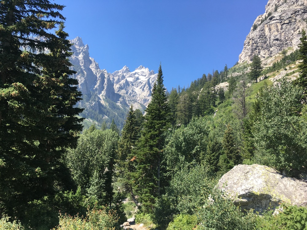 Looking up Cascade Canyon