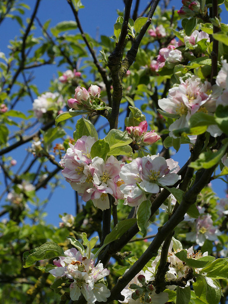Top 10 native trees and shrubs — Green matters & more