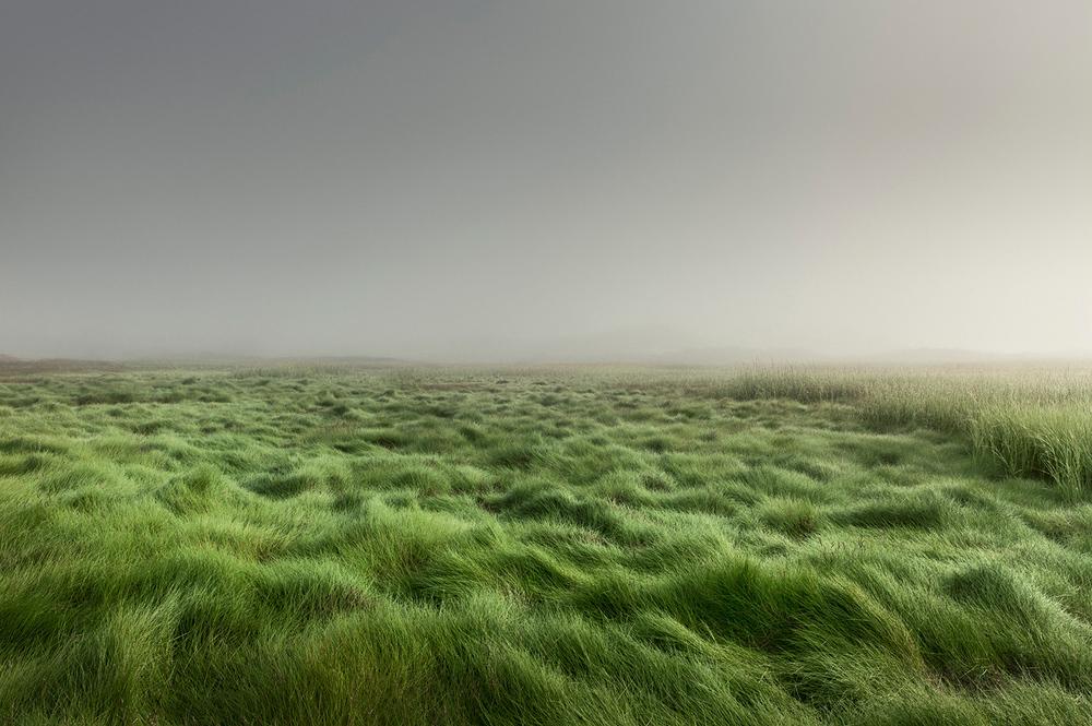 Moors Grass