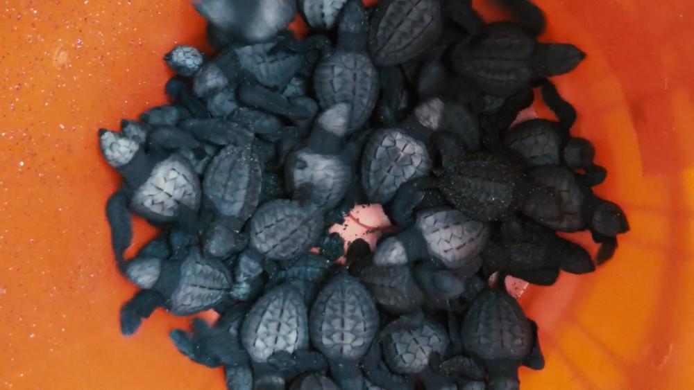 turtle bucket copy.png