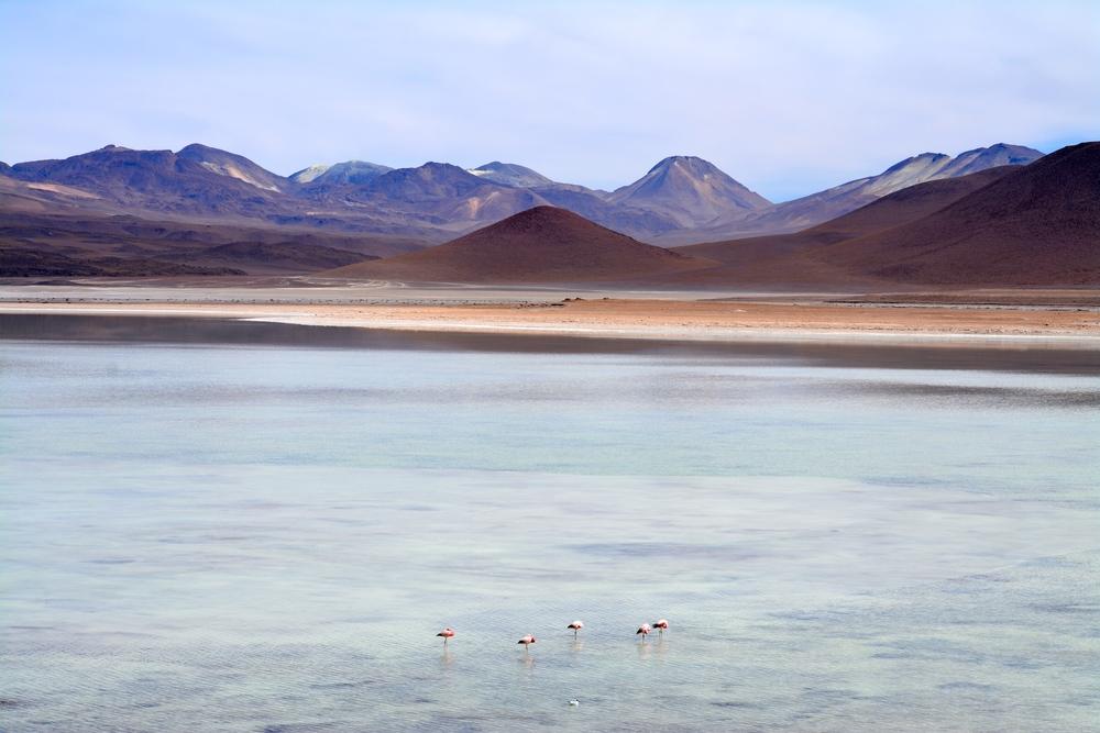 Laguna Blanca in Eduardo Avaroa National Reserve