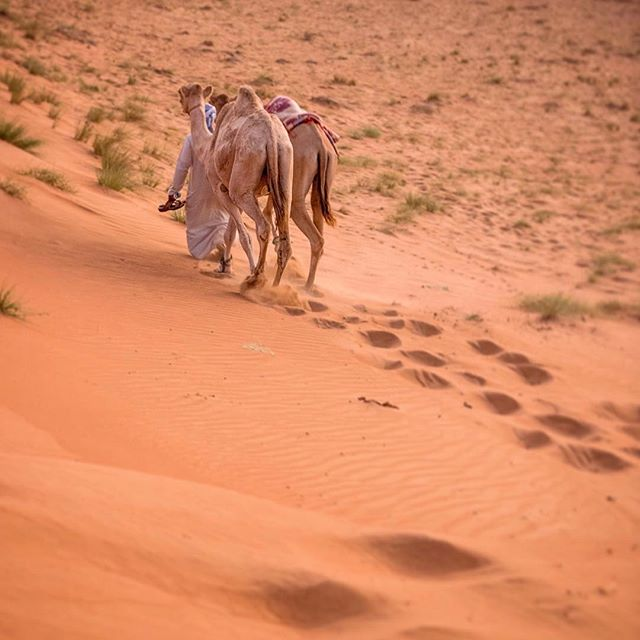 Footloose and fancy-free in the Wahiba Sands desert of Oman. My favorite part of this picture: the camel driver, largely obscured by camels, holding his flip flops as he descends a dune. Extreme dislike of sand in shoes is a universal thing.