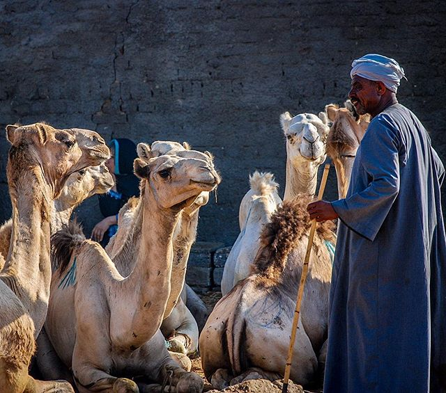 A captive audience at the Birqash camel market outside of Cairo. Years ago I spent a summer studying in Egypt, and of the many sights visited and towns explored, the morning I spent at this bustling market amidst traders and braying camels remains one of my favorite memories.