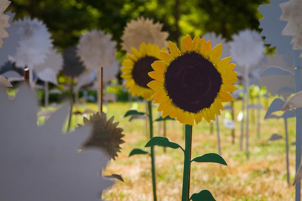 Sunflower_Art_Fest_CodyBuesing-5.jpg