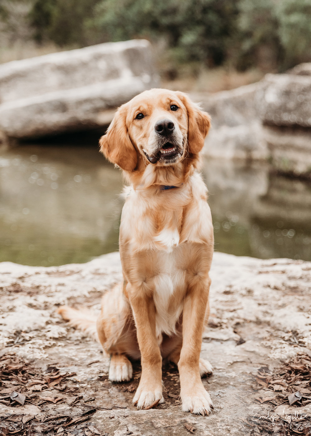 Family Photographer_Pet Photographer_Round Rock Photographer_Emily Ingalls Photography_Austin Photographer_Pflugerville Photographer_Georgetown Photographer-6.jpg