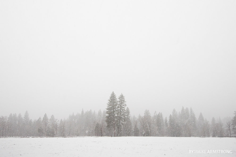 Snow and Fog over Tree Line · Photography by Maike Armstrong
